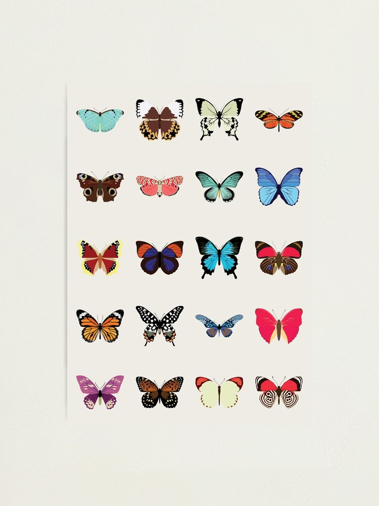 Alternate view of Butterflies Photographic Print