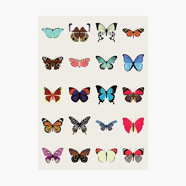 Butterflies Photographic Print