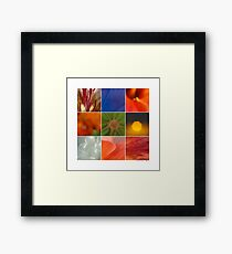 Abstracts - Patterns in Nature Framed Print