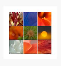 Abstracts - Patterns in Nature Photographic Print