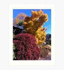 Autumn in Mt Tomah Art Print