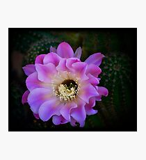 The Beauty of Nature  Photographic Print