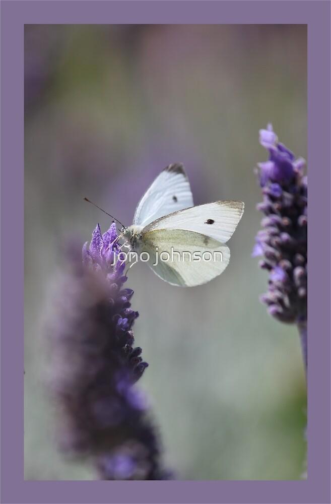 Lavender Butterfly by jono johnson