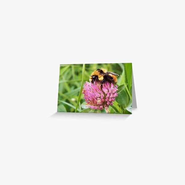 Clover Bumblebee Greeting Card