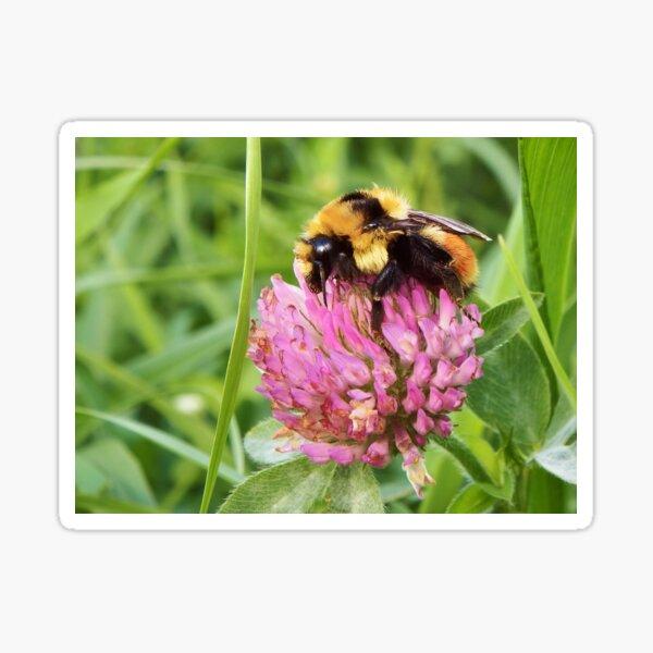 Clover Bumblebee Sticker