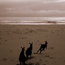 Ready, Steady....Go!!!! by Of Land & Ocean - Samantha Goode