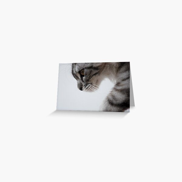 Nothing but grace - Maine Coon kitten Greeting Card