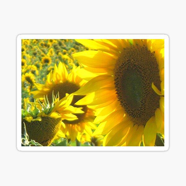 Sunny Sunflowers Sticker