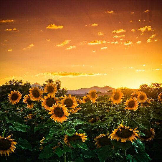 Heaven's Evening by John  De Bord Photography