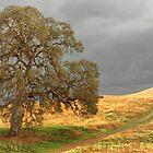 Off the Beaten Path by Floyd Hopper