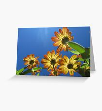Flowers in the Sun Greeting Card