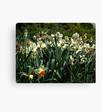 Great to see you again, how long has it been? A year? Canvas Print