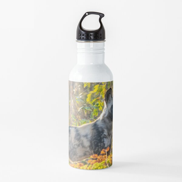 African Painted Dog #2, Hwange National Park, Zimbabwe Water Bottle