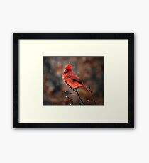 Cardinal in a Snowstorm Framed Print