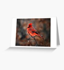 Cardinal in a Snowstorm Greeting Card