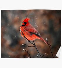 Cardinal in a Snowstorm Poster
