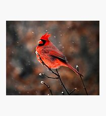 Cardinal in a Snowstorm Photographic Print