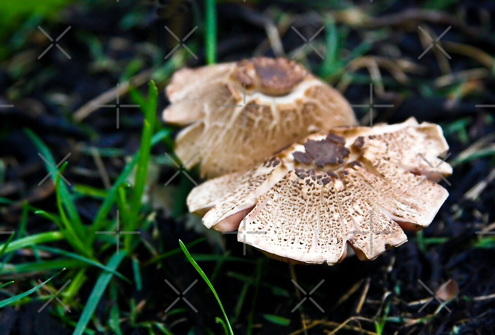 Nature's Ballet Tutus!  by Heather Friedman