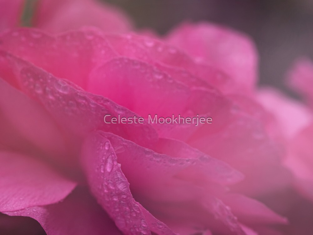 Reverie in pink by Celeste Mookherjee