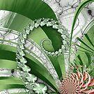 Primavera by Pam Blackstone