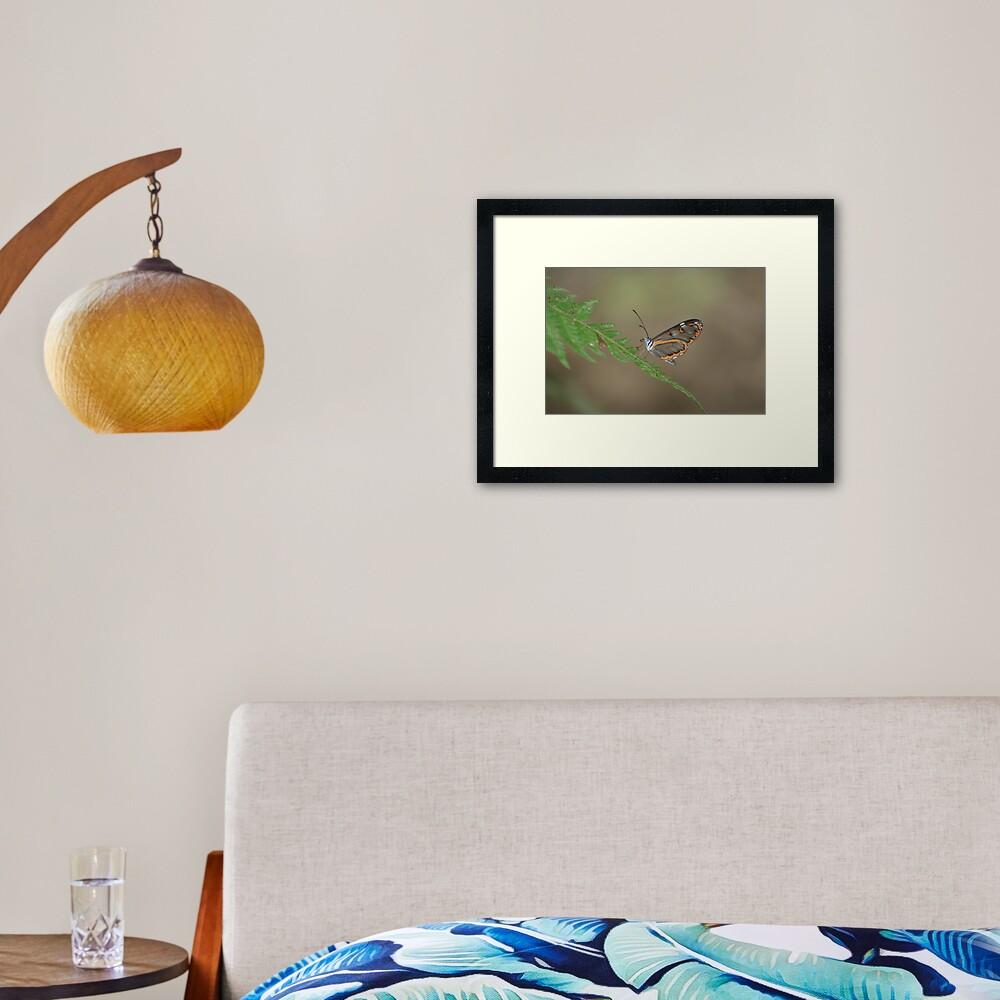 Peruvian Glass Butterfly Framed Art Print
