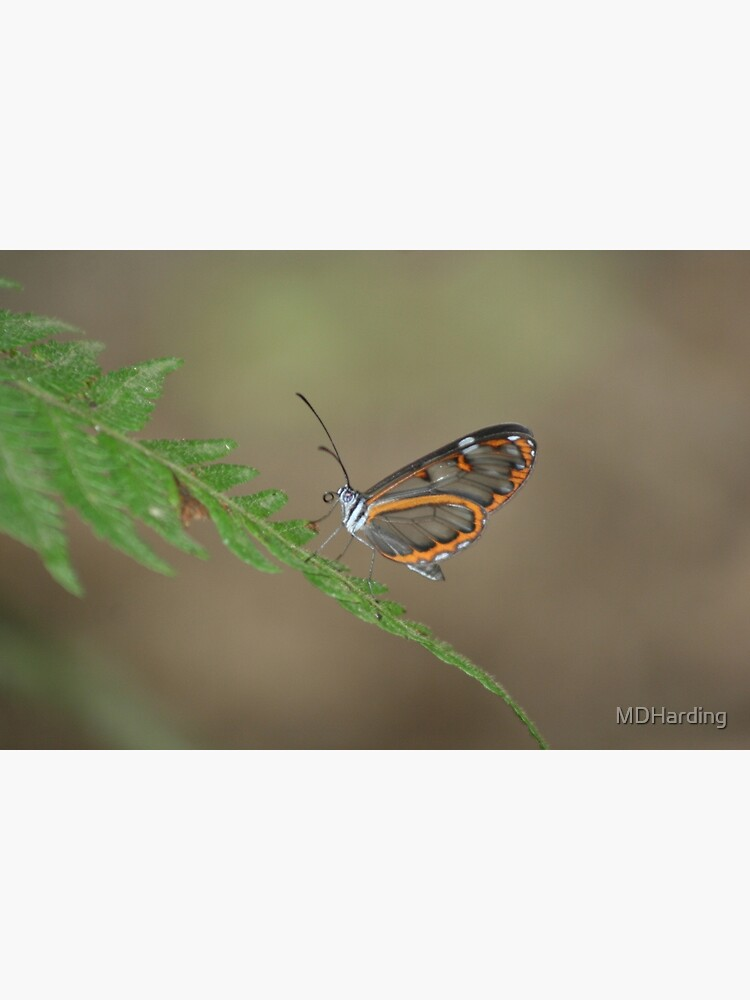 Peruvian Glass Butterfly by MDHarding