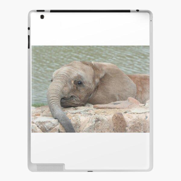African Baby Elephant  iPad Skin