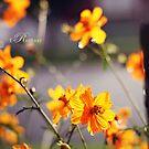 A sunny day by fRantasy
