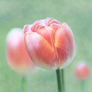 Tulip by Lifeware