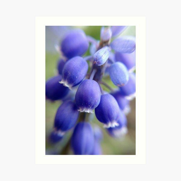 Purple Bells Art Print