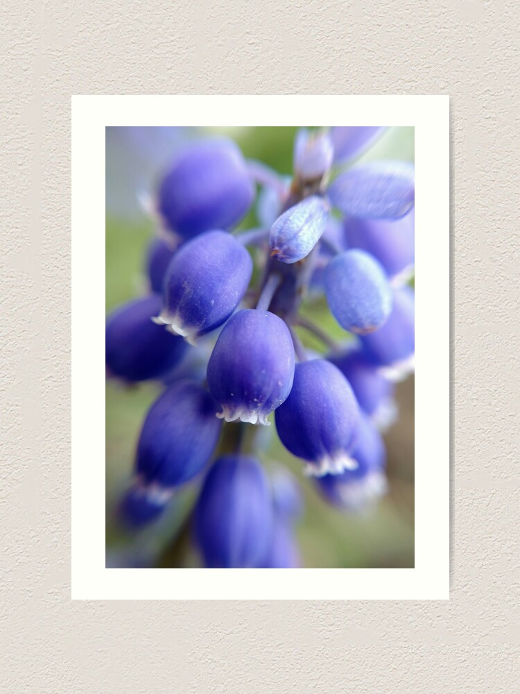 Alternate view of Purple Bells Art Print