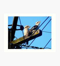 Wired Kookaburras Art Print