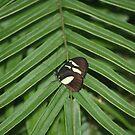 Butterfly & Fern by Karen K Smith