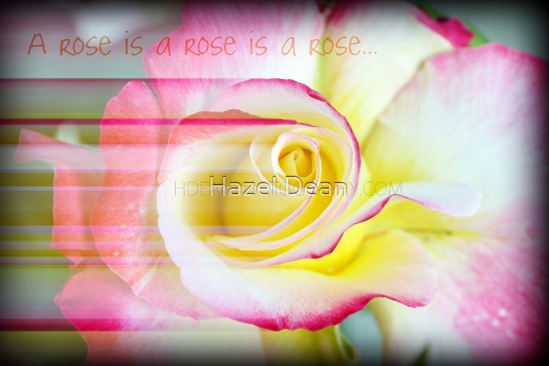 A rose is a rose... by Hazel Dean