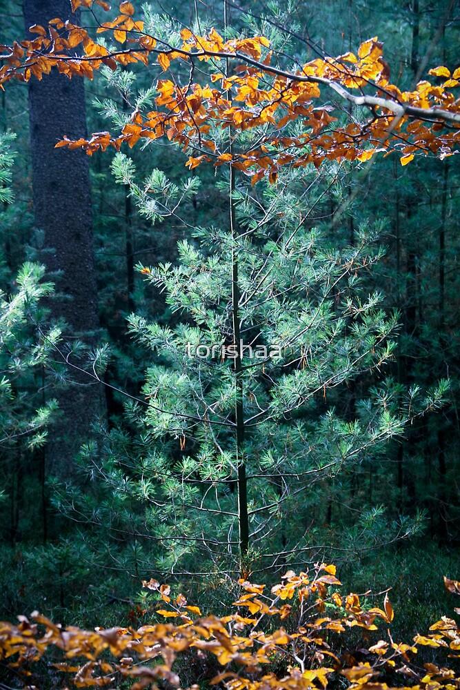 Odenwald by torishaa