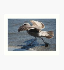 Seagull Walking on Doran Beach Art Print