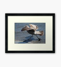 Seagull Walking on Doran Beach Framed Print