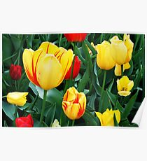 Tulip Patch Poster