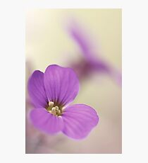 Pink Flowers...*2* Photographic Print