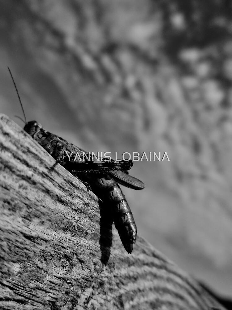 Magic Grasshopper By Yannis Lobaina by lobaina1979