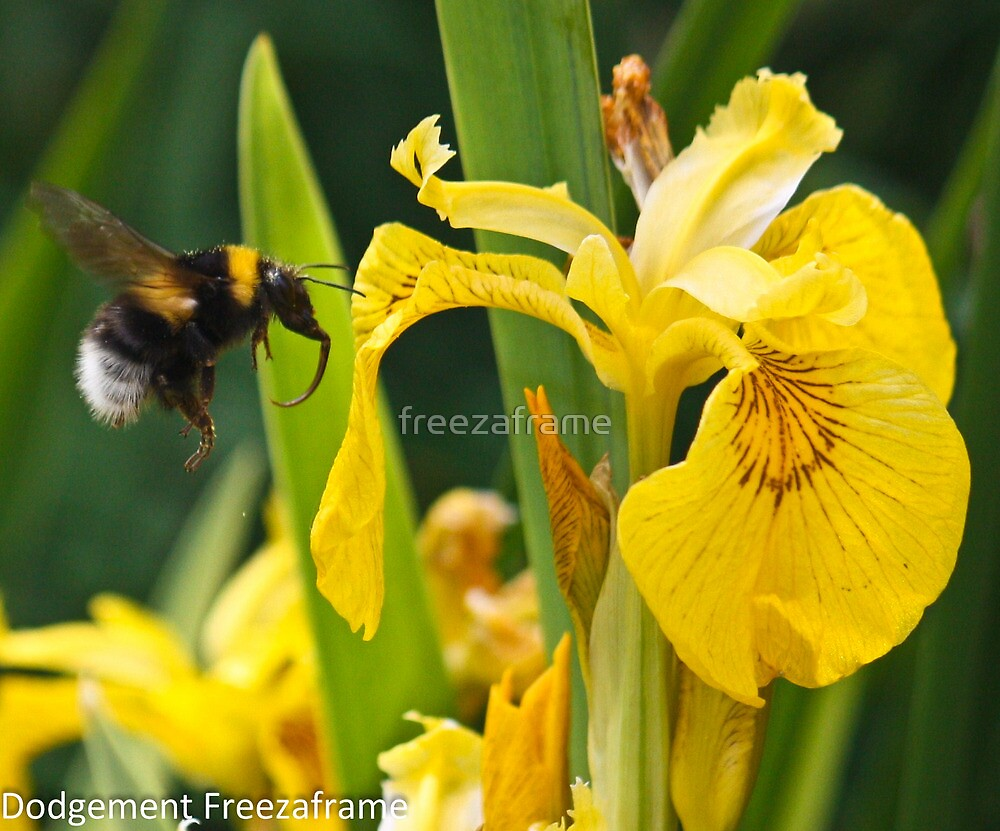 Bumble Bee by freezaframe
