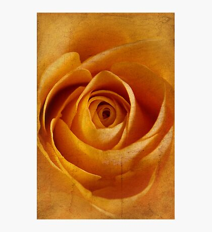 Textured Rose Photographic Print