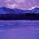 purple Majesty ...  by rjheller1150