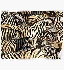 Zebras I Poster