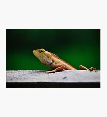 when I grow up I want to be a crocodile Photographic Print