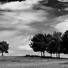 Trees by Richard Downes
