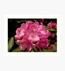 Rhodo Bloom  ^ Art Print