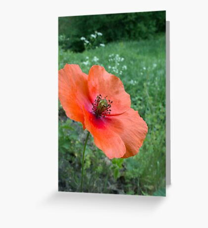 Coquelicot Rouge... pour Maman! Greeting Card