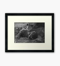 Mother And Baby Elephant Seals Framed Print