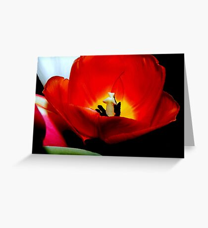 Nature's spring beauty © Greeting Card